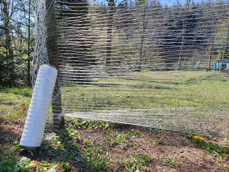 Siatka leśna do ochrony zabezpieczania przed zwierzyną zwierzętami (1)