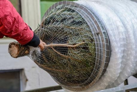 LZ34 Siatka rękaw do pakowania choinek 34cm x 300m (1)